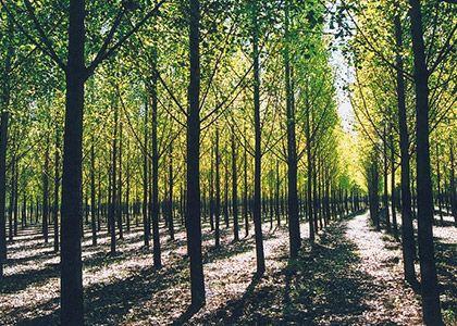 Erdőgazdálkodási szolgáltatások